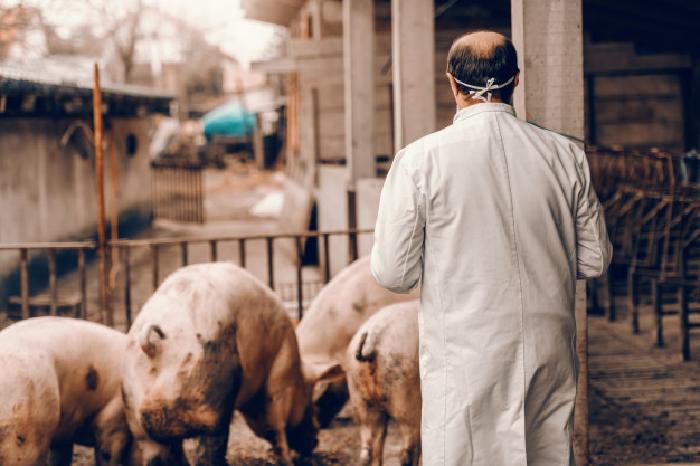 رشته بهداشت و بازرسی گوشت