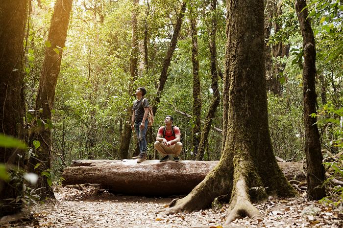 رشته علوم و مهندسی جنگل - معرفی جامع و بازار کار علوم و مهندسی جنگل