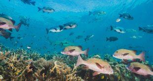 رشته زیست شناسی دریا
