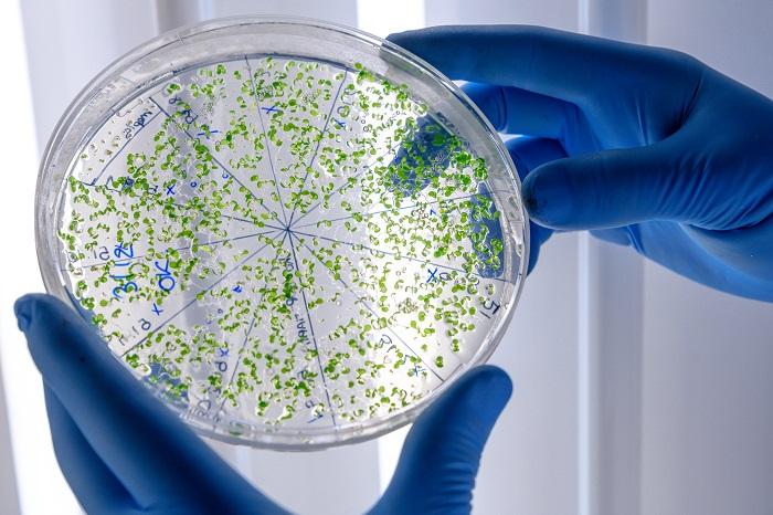 رتبه لازم برای رشته زیست شناسی سلولی و مولکولی - طبق آخرین رتبه زیست شناسی سلولی و مولکولی 98 - 97
