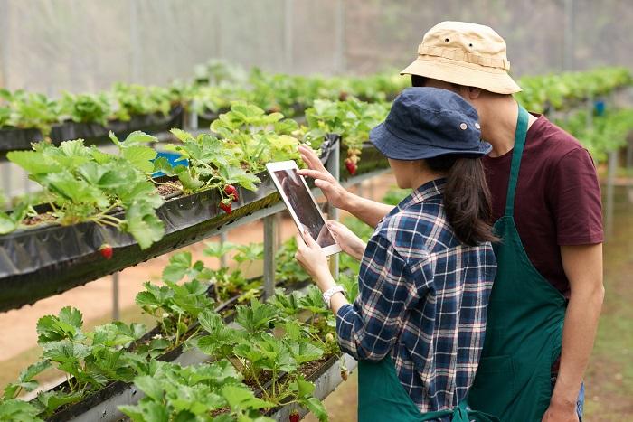 اقتصاد کشاورزی-معرفی جامع و بازار کار رشته اقتصاد کشاورزی
